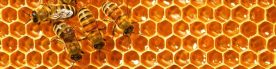 cropped-website_bees-in-the-hive1.jpg